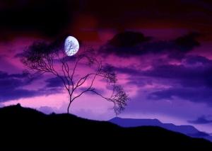 tree+moon+purple+sky